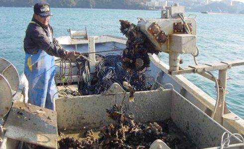 牡蠣養殖用ロープ
